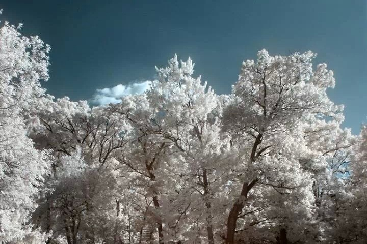 """Foreign Classic: """"Snow Country"""""""